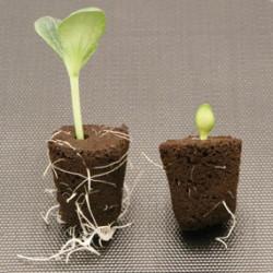 ULTIMA A+B 500м./ 1л. - Тор за растеж и цъфтеж